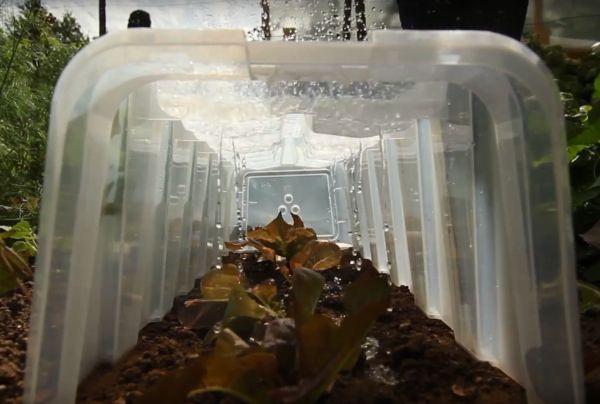 sloneczny-tunele-do-upraw-jak-dziala-system-kapilarnego-nawadniania.jpg